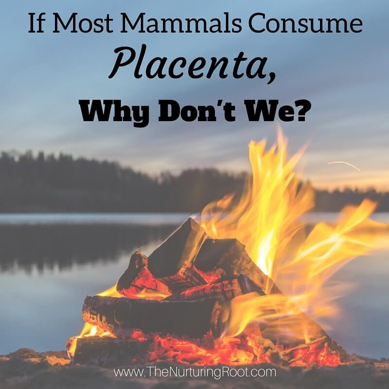 Why don't humans ingest placenta?